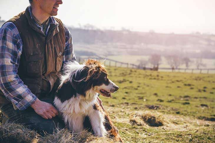 Man sitting with border collie in a field
